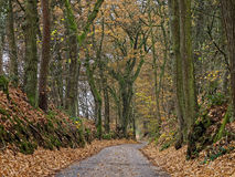 Road through oak forest at fall. A small road winding through an oak forest. Forest landscape in Germany at fall Royalty Free Stock Photography
