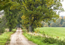 Road among oak trees in autumn. Stock Images