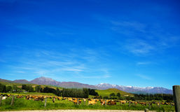 The road  from Oamaru to Omarama New Zealand Royalty Free Stock Images