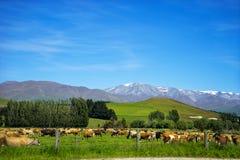 The road  from Oamaru to Omarama New Zealand. Landscape of  the road from Oamaru to Omarama New Zealand South island Royalty Free Stock Photography