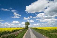 Road between oilseed rape fields. With blue sky with clouds, Auvergne, France Stock Images