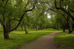 Road in an old Apple orchard. Royalty Free Stock Image