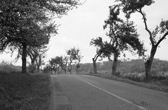 Road in the old avenue of trees Royalty Free Stock Photos