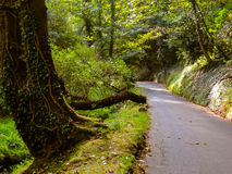 Road in the old shady forest Royalty Free Stock Photos