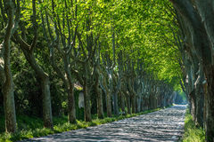Road among old trees stock photos