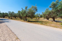 Road and Olive Stock Photo