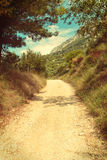 Road between olive trees in Croatia - vingage version Royalty Free Stock Images