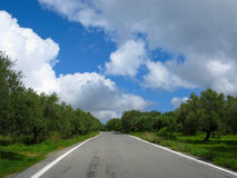 Road with olive trees Royalty Free Stock Photography