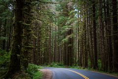 Road in Olympic National Park forest stock image