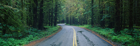 Road in Olympic National Park, WA Royalty Free Stock Image