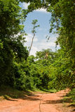 Road On The Forest Stock Photo