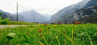 Road out of the mountains, telegraph poles and lush green grass. Stock Photography
