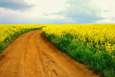 Road over yellow field. Road over field with yellow flowers Royalty Free Stock Photos