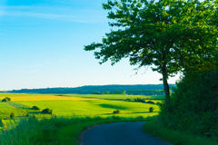 Road overlooking the fields. Road overlooking the sunny fields royalty free stock photo