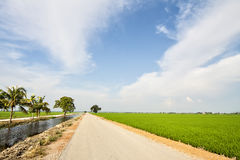 Road of the paddy fields Royalty Free Stock Images