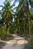 Road in palm forest i Royalty Free Stock Photography