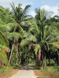 Road through the palm grove Stock Images