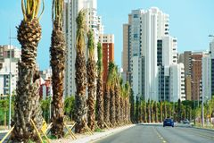 Road at Palm Grove in Elche town Royalty Free Stock Photography