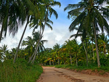The road through the palm grove. Royalty Free Stock Photography