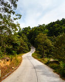 Road in the palm jungle of Thailand Royalty Free Stock Image