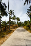Road in the palm jungle of Thailand Stock Images