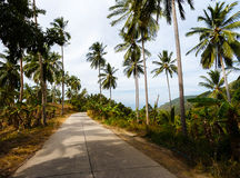 Road in the palm jungle of Thailand Royalty Free Stock Photos