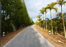 Road in the palm jungle of Thailand Stock Photo