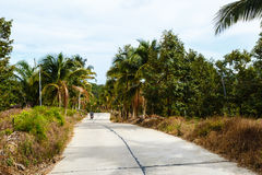 Road in the palm jungle of Thailand Stock Photography