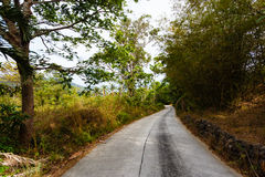 Road in the palm jungle of Thailand Royalty Free Stock Images