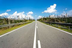 Road at palm oil plantations Royalty Free Stock Images