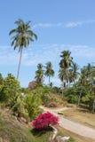 Road and palm tree. Island Koh Samui, Thailand Stock Image