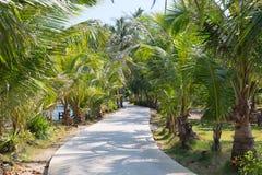 Road through the palm trees Royalty Free Stock Photos