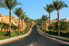 Road among palms Egypt Royalty Free Stock Photography