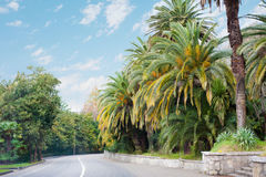 Road among palms Stock Photos