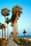 Road with palms. By the sea Stock Photography
