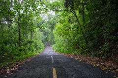 Road through Panama jungle Royalty Free Stock Images