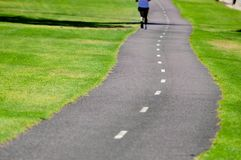 Road in a park Stock Photography