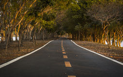 Road in the park Royalty Free Stock Image