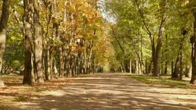 Road in the park. Autumn daytime. Smooth dolly shot.  stock video footage