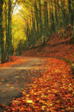 Road in the park Royalty Free Stock Photography