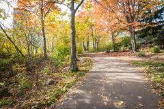 Road in a park. During beautiful fall time Royalty Free Stock Photo