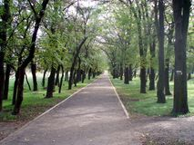 Road in the park. Beautiful road in the park, among the trees royalty free stock images
