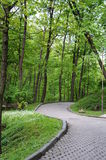 The road in the park among the green trees. And grass Royalty Free Stock Photo