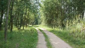 Road in a park among green trees and shrubs stock video