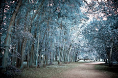 Road in the park - infrared Royalty Free Stock Photos