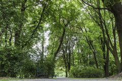 Road in the park Royalty Free Stock Photo