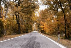 Road in the park in november Royalty Free Stock Photography