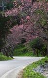 Road in park with sakura tree Stock Photography