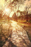 Road in the park at sunset Royalty Free Stock Image