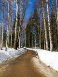 A road in the park. A road thawing under the warm spring sun Royalty Free Stock Image